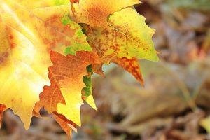 autumn-1638480_640